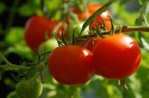 tomato-2643774_1280