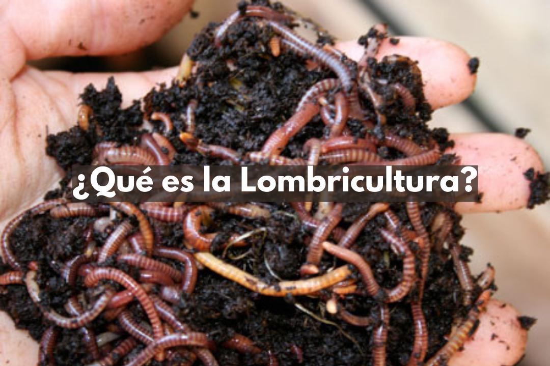 Qué es la Lombricultura